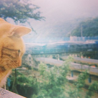 猴硐貓村 #cat #film #yashica