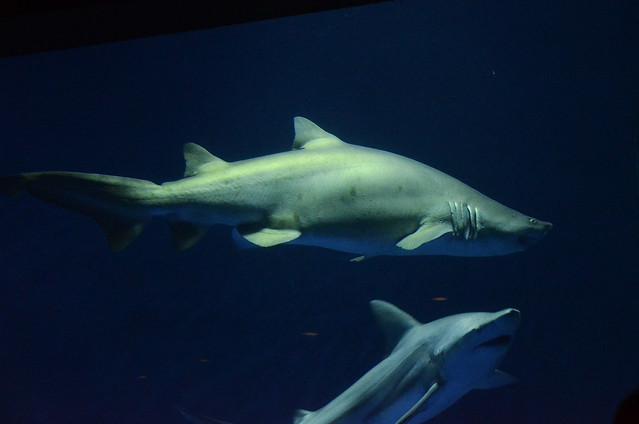 Image Result For Aquarium San Antonio