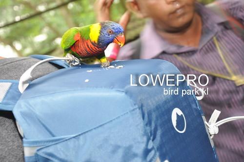 lowepro A
