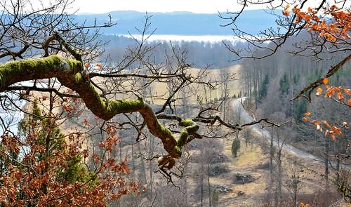 trees lake tree forest moss nikon branch view sweden nikkor varberg d5200 dagsås nikkor1685f3556 nikond5200 hiaklitten