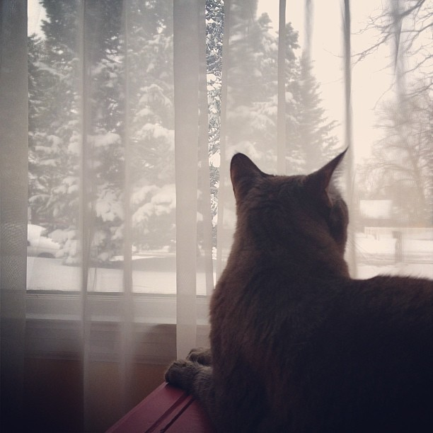 Day104 Barrett watching the snow come down 4.15.13 #jessie365