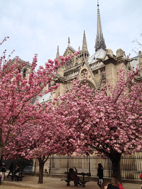 As cerejeiras em Paris