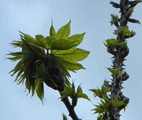 thorny plant with Dr Seuss Leaves