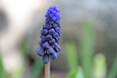 spring flowers106