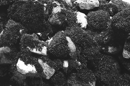 Изгороди на острове Муху