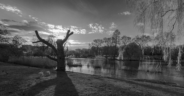 Sunset in St James Park b&w