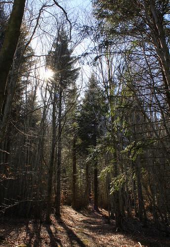 Hêtraie sapinière des Monts Breysse- 43 (9)