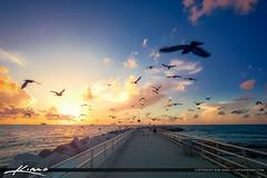Sunrise Jupiter Inlet Pigeons Over the Jetty