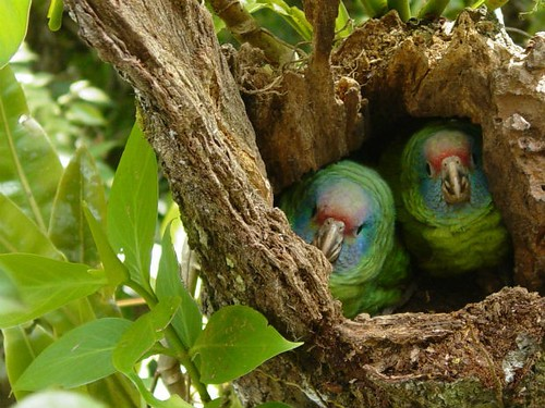 Cameras Oversee Parrots Birth And Development City Parrots