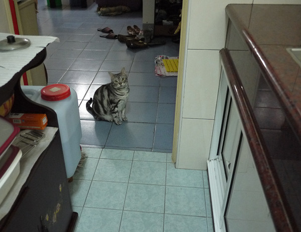 5等太久就會先坐在廚房外面