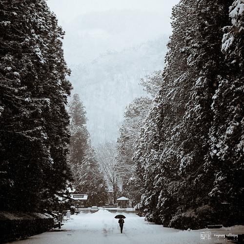 #29 日光,聽雪的聲音