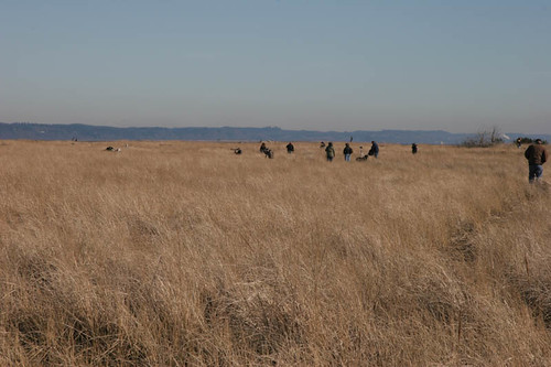 Birders at Damon Point