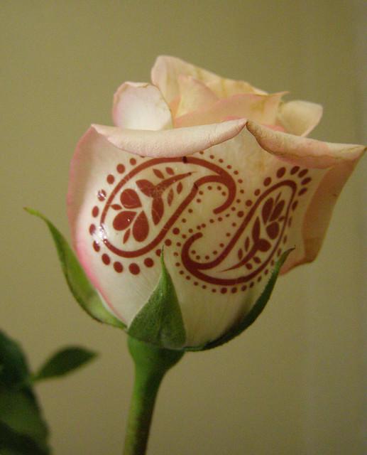 Henna tattoo on rose flickr photo sharing for Rose henna tattoo