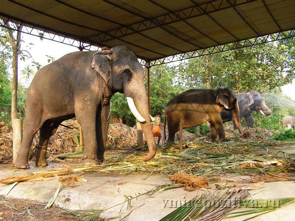 Индия: Тропическая Керала