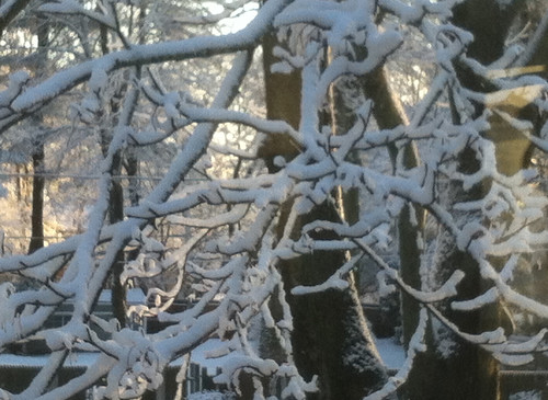 Morning Light Snowy Branches by randubnick