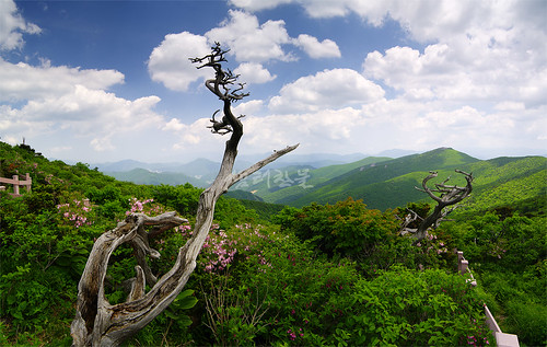 park trip travel flowers trees sky mountain green nature clouds landscape spring tour bluesky s korea southkorea provincial 韓國 한국 대한민국 republicofkorea taebaeksan 大韓民国 республикакорея républiquedecorée poblachtnacóiré mttaebaek taebaeksanprovincialpark