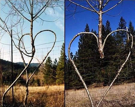 weird_trees20