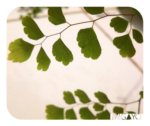 hojas1