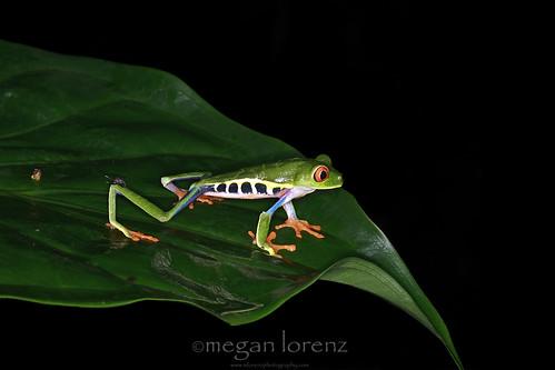 Take A Leap by Megan Lorenz