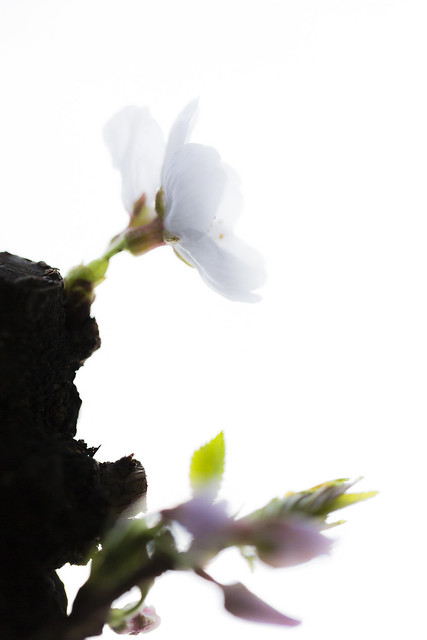 20130323-_5D33816