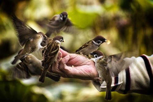 [フリー画像素材] 哺乳類 (その他), 鳥類 (その他), 雀・スズメ, ボディーパーツ - 手 ID:201304011600