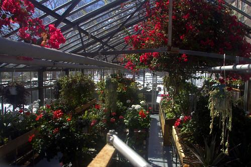 Greenhouse through the Window