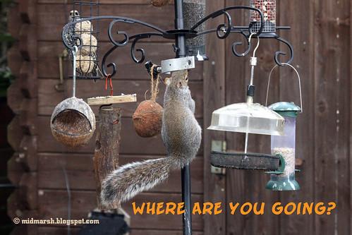 Squirrel Tale 3.jpg