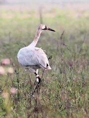 Birding Hendry County, Florida