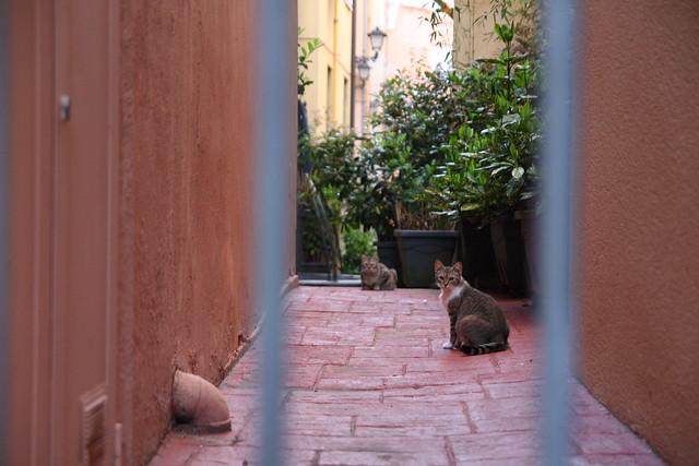 Gatos en patio de cantón