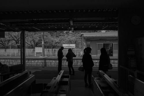 sakura memory 2013