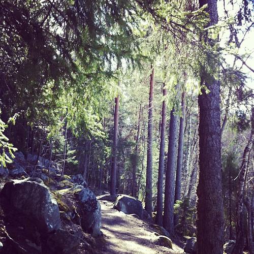 Drog till skogs!