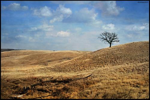 paisagem Iowa