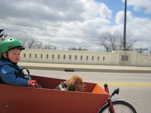 boy and his dog navigate the bridge on a bakfiets