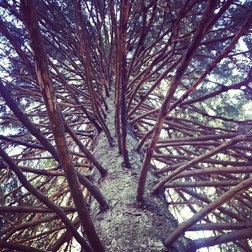 Perfekt klätterträd för skogstomtar!