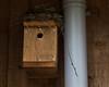 Rosemoor Birds nest