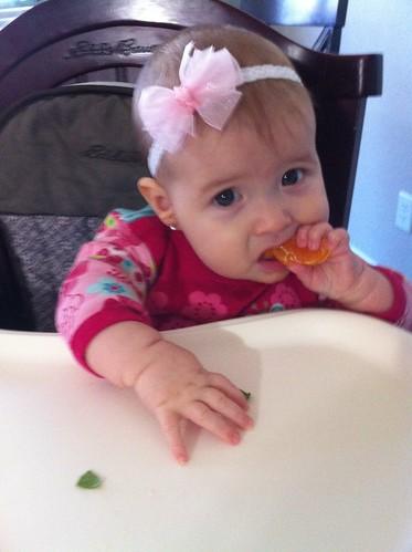Dakota Bear Eating an Orange (trying)