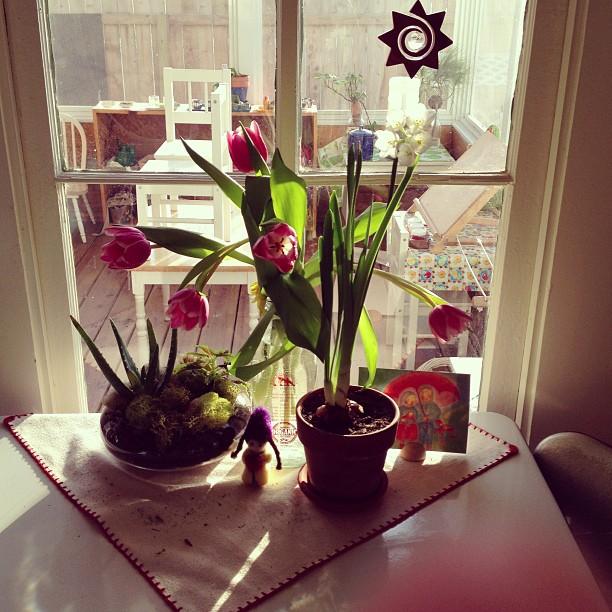 Flowering bulbs!!