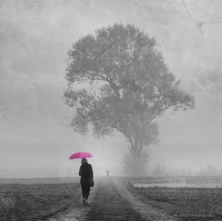 A Pink Umbrella Morning