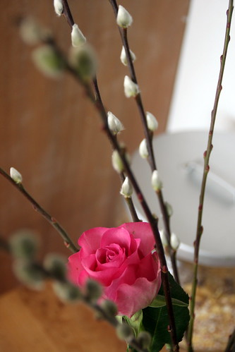 willow catkins and pink roses.