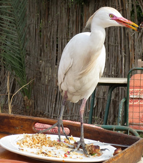 EgyptRestaurant-7