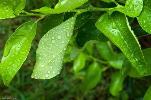 naturaleza hojas flora colombia valledelcauca