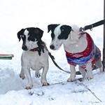 Dogs @ Strážné