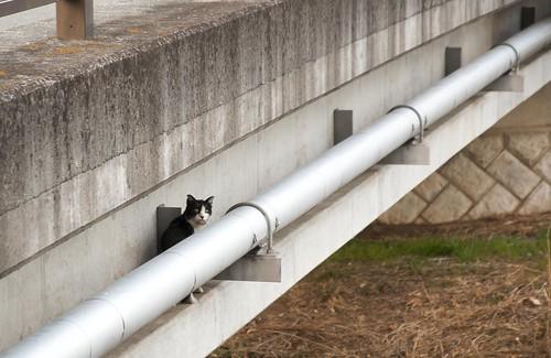 猫専用通路