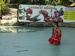 Crocodile Show Krokodil Thailand Bung Chawak Suphanburi Province