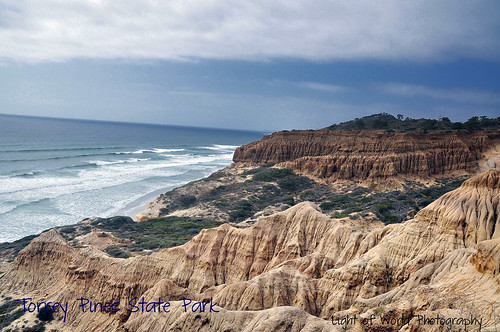 torrey pines state park 2