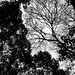 Leafy ambush by Slavescu Emanuel