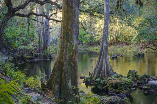 river palms florida spanishmoss tropical blackwater riverbank palmettos hdr cypresstrees wetland hillsboroughriver cypressknees cabbagepalm