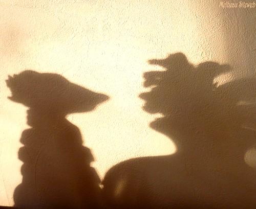 D'ombre & de lumière