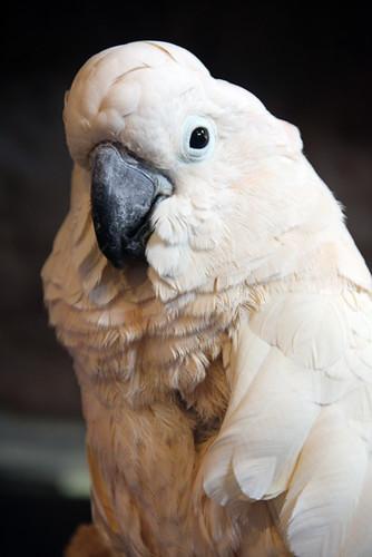 Aquarium_Parrot