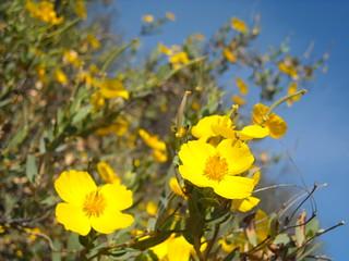 Topanga Flowers1